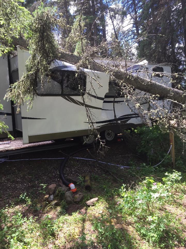 Fallen Tree Removal 7